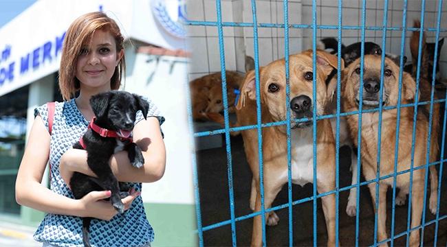 'Bağcılar'da 268 Sokak Hayvanı Sahiplendirildi'