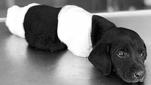 Yavru Köpek Vahşetine Soruşturma
