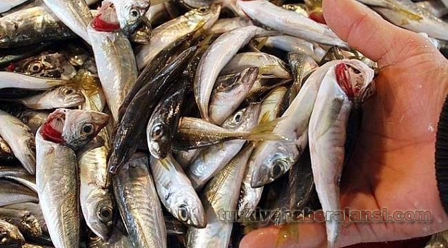 Kırmızı Etten Sonra Bir Uyarı da Balık İçin!