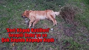 Bodrum'da 'Seri Hayvan Katilleri' Alarmı