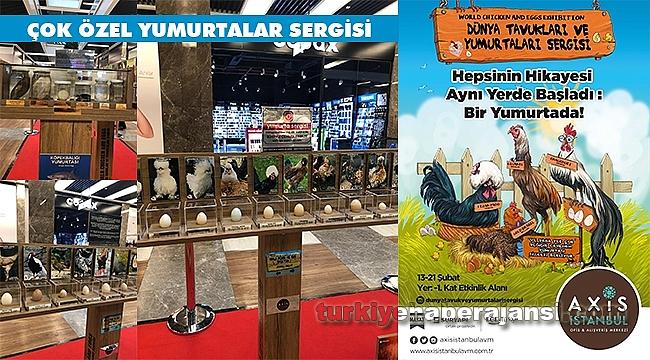 Dünyanın En Özel Yumurtaları İstanbullularla Buluşuyor