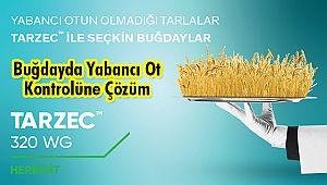 Buğdayda Yabancı Ot Kontrolüne Çözüm: TARZECTM 320 WG