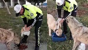 Trafikçi Polisin Hayvan Sevgisi