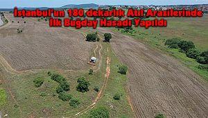İstanbul'un 180 dekarlık Atıl Arazilerinde İlk Buğday Hasadı Yapıldı