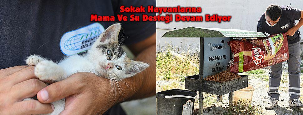 Sokak Hayvanlarına Mama Ve Su Desteği Devam Ediyor