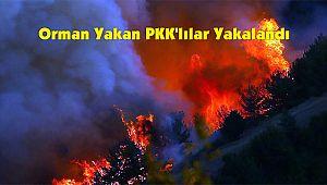 Orman Yakan PKK'lılar Yakalandı