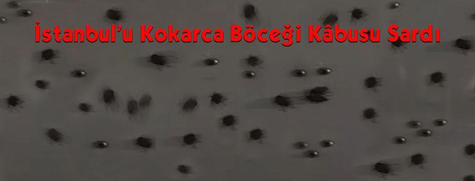 İstanbul'u Kokarca Böceği Kâbusu Sardı