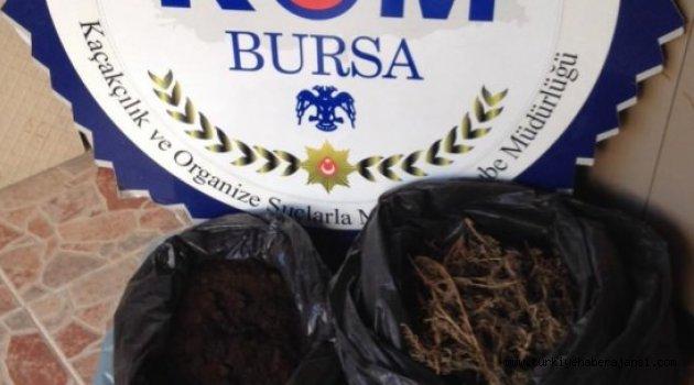 Bursa'da Esrar Operasyonu