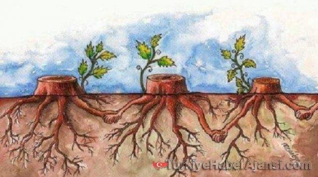 'Kısa Film Yarışması'nda Anadolu Bitkileri