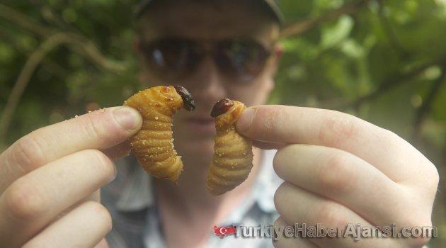 Önümüzdeki 50 Yıl İçinde Böcek Yememiz Gerekebilir!...