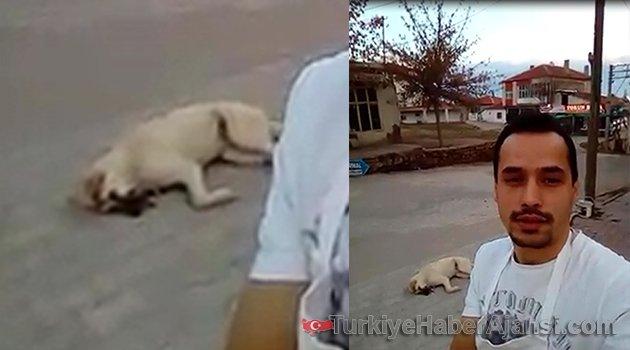 Sahipsiz Hayvanları Zehirledi Sokakta Bıraktılar