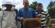 Yığılca'da Yılda 15 Bin Ana Arı Üretiliyor