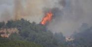 Aliağa'da 1 Hektar Kızılçam Ormanı Yandı