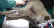Araba ile Çarpılan Köpek, Kazada Kusurlu Bulundu