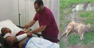 Kendisini Parçalamak İsteyen Köpeğini Öldürdü!