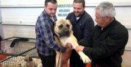 Köpeği 10 Bin Euro'ya Satmadı