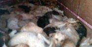 Köpek katliamı skandalı büyüyor