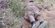PKK'nın Sözde Sorumlusu Böyle Öldürüldü!
