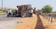 TIR Devrildi, 26 Ton Buğday Yola Saçıldı