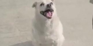 Köpeğin Vefası